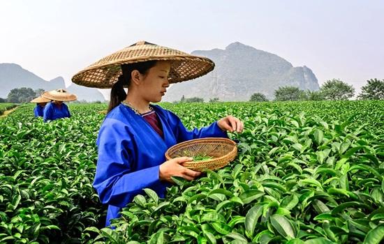 Можно ли заразиться коронавирусом через фрукты из Китая – есть ли риск
